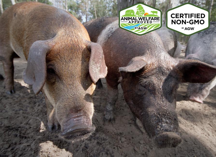 GrassRoots Pork Company In Beulaville, NC Farm Profile
