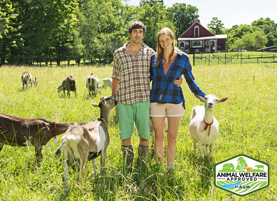 Big Picture Farm Farm Profile
