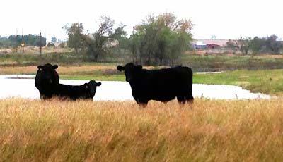 Baker Ranch In Belton, TX Farm Profile