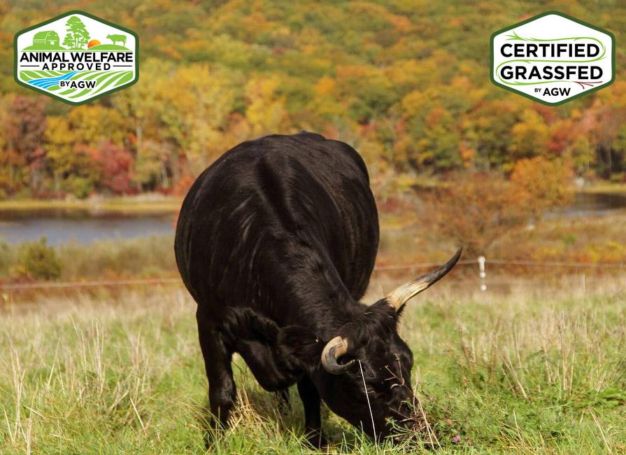 Glynwood Center Farm In New York