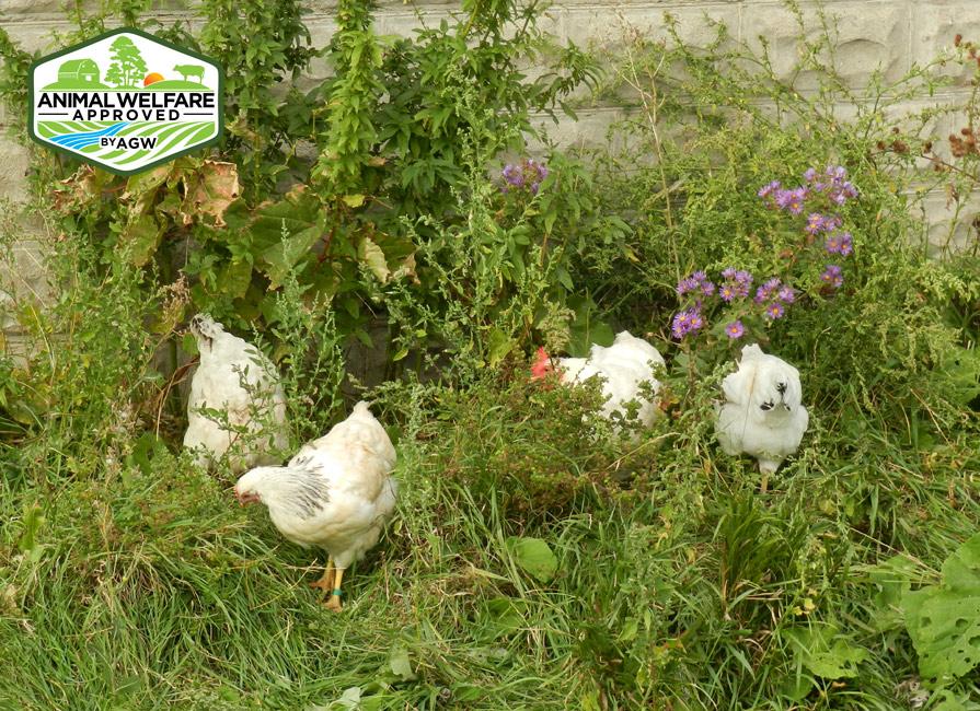 Seven Songs Organic Farm In Kenyon, MN Farm Profile