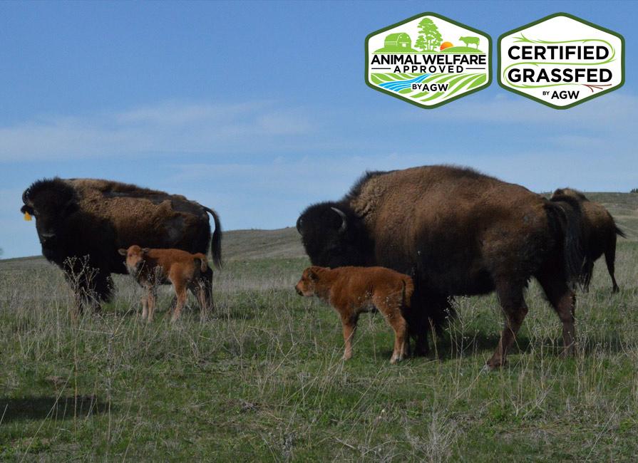 Straight Arrow Bison Ranch In Broken Bow, NE Farm Profile