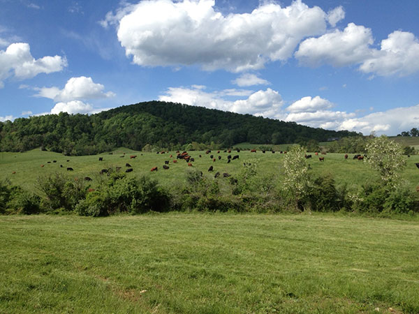 Dreaming of Turning Out on Spring Lush Pasture (Wolf Creek Farm)