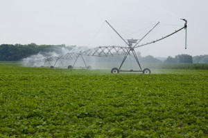 Irrigated Soy