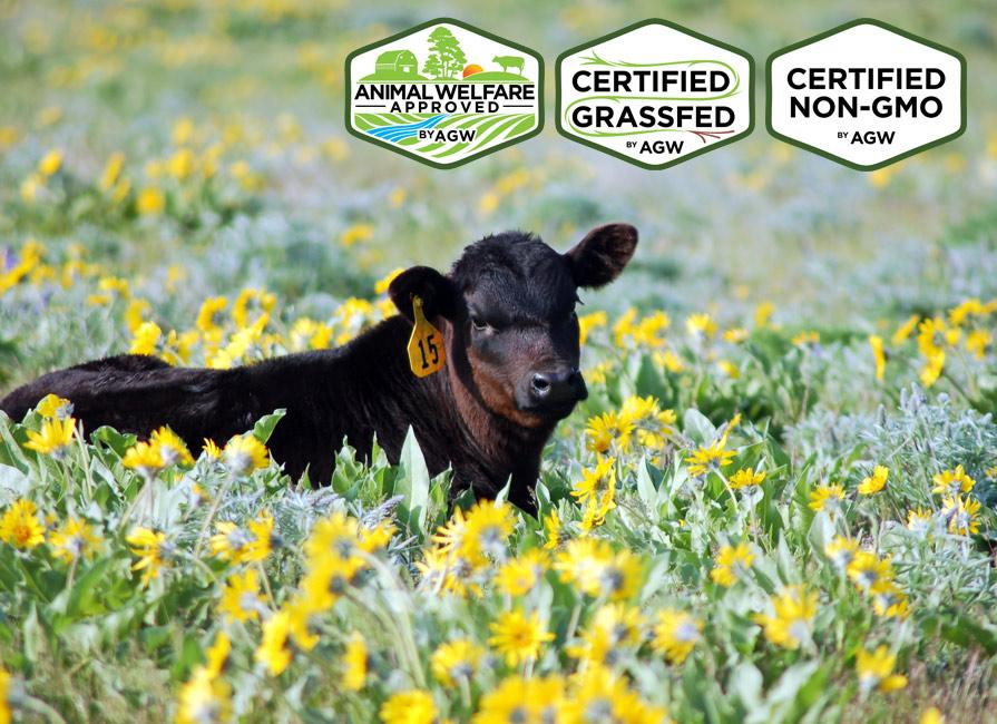 NFR Beef In Fallon, NY Farm Profile