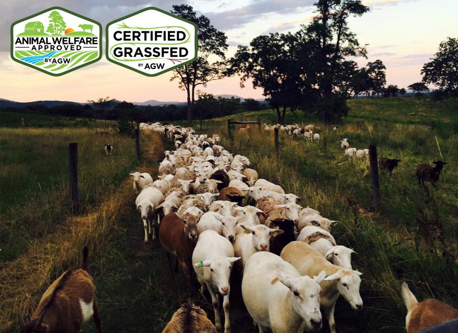 Bean Hollow Grassfed In Flint Hill, VA Farm Profile