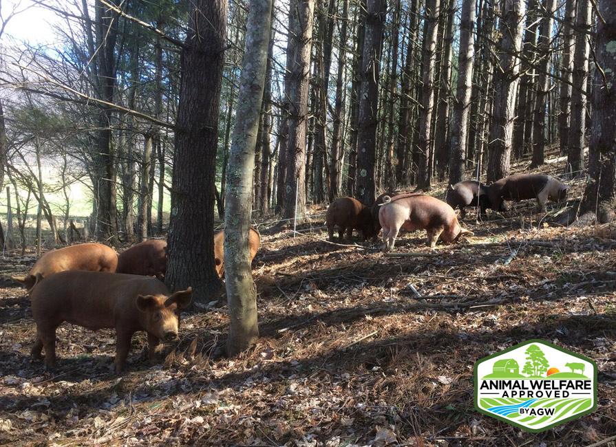 Against The Grain Farm In Zionville, NC Farm Profile