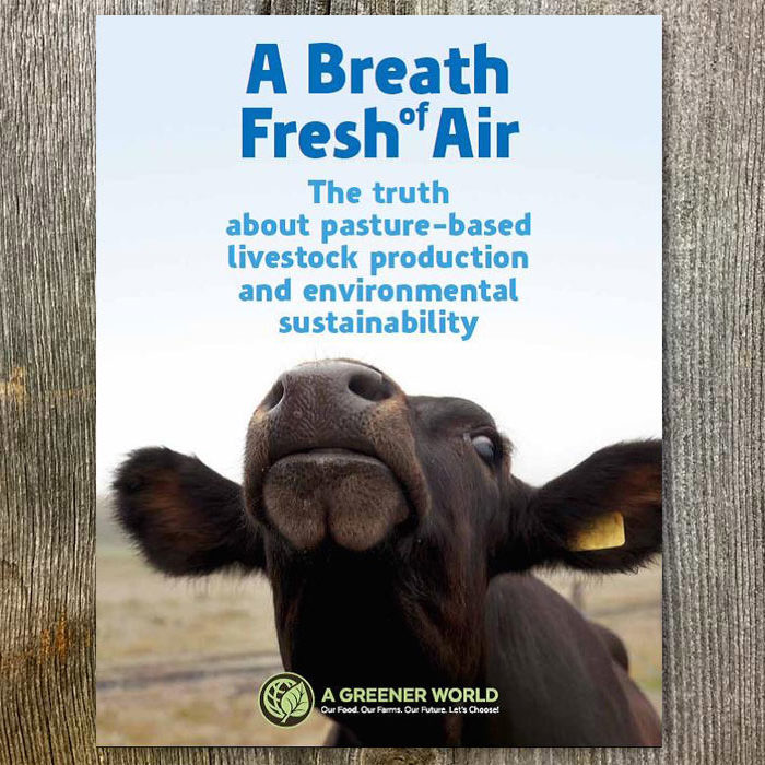 A Breath Of Fresh Air Report