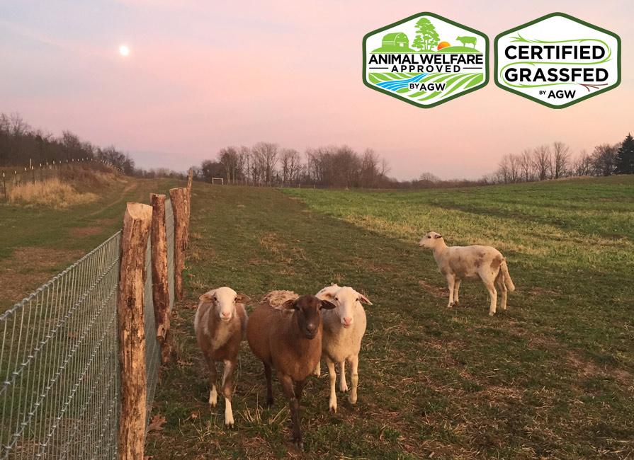 Verdant Hollow Farms In Buchanan, MI Farm Profile