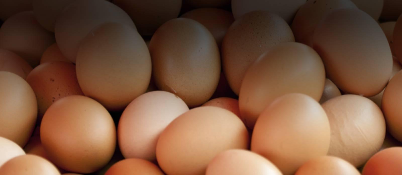 AGW-certified eggs