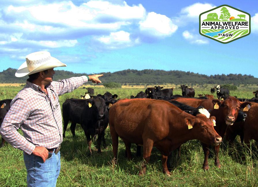 Kunoa Cattle Company In Kalopei, HI Farm Profile