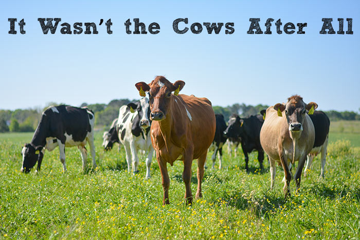 It Wasn't The Cows After All