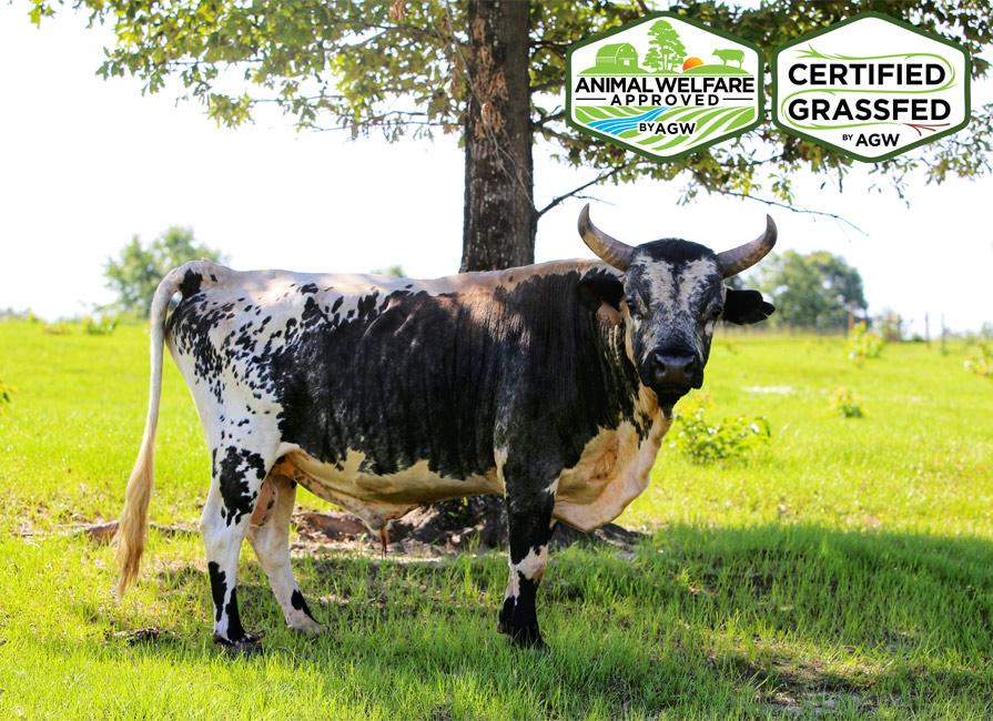 Georgia Native Cattle Company In Buena Vista, GA Farm Profile