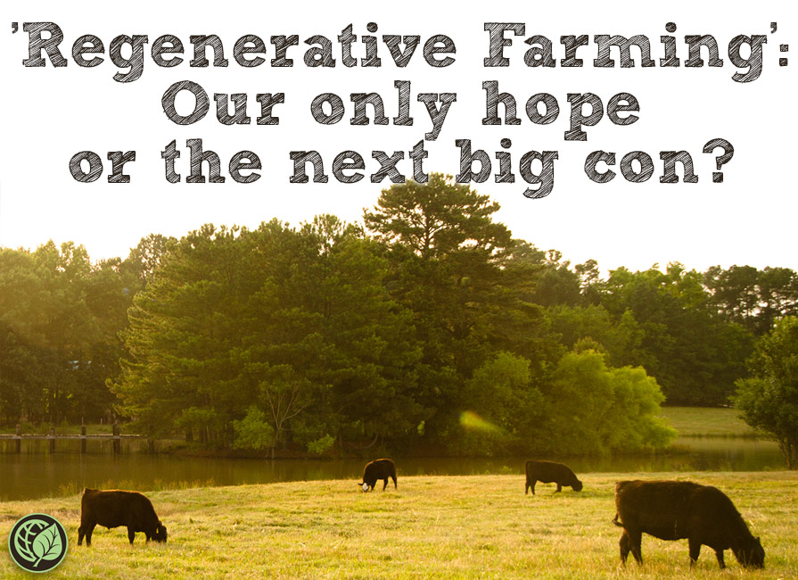 Regenerative Farming: Our Only Hope Or The Next Big Con? Blog