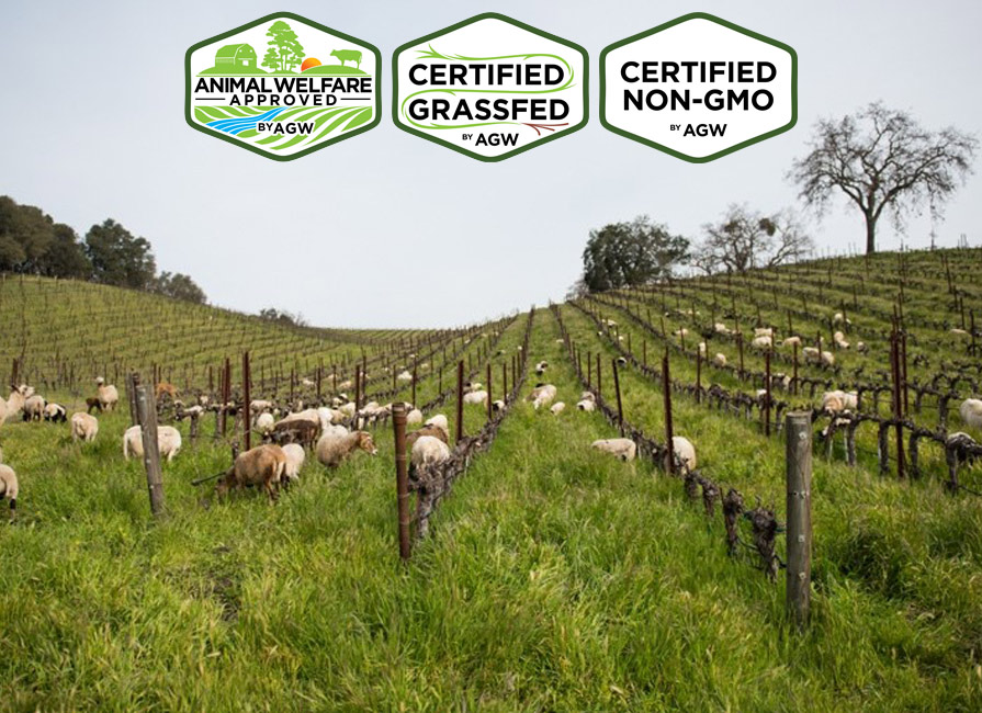 Tablas Creek Vineyard Farm Profile
