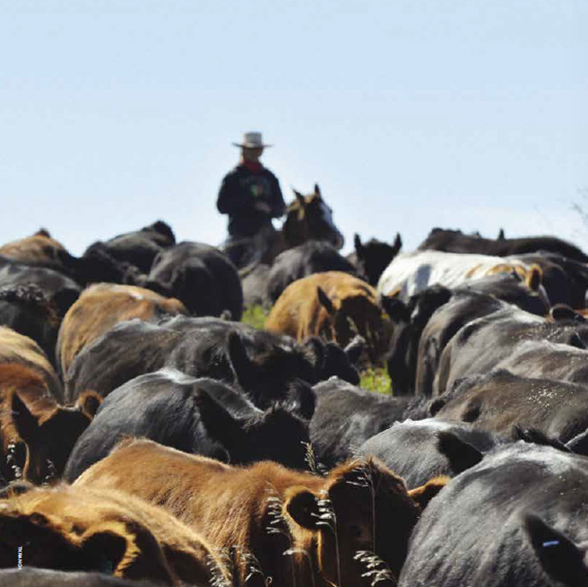 Getting A Handle On The Herd Blog