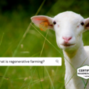 """What Is """"Regenerative""""? 9 Reasons You Should Care"""