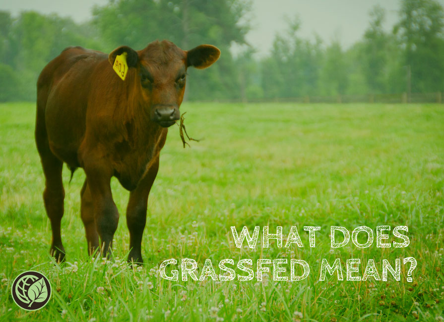 What Is Grassfed? Blog