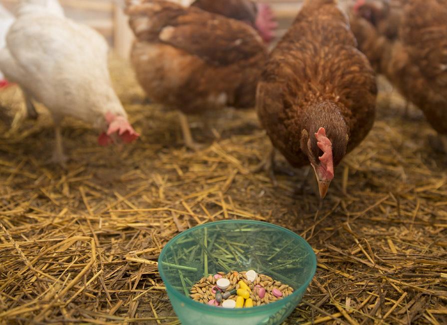 Antibiotic-Free Labeling