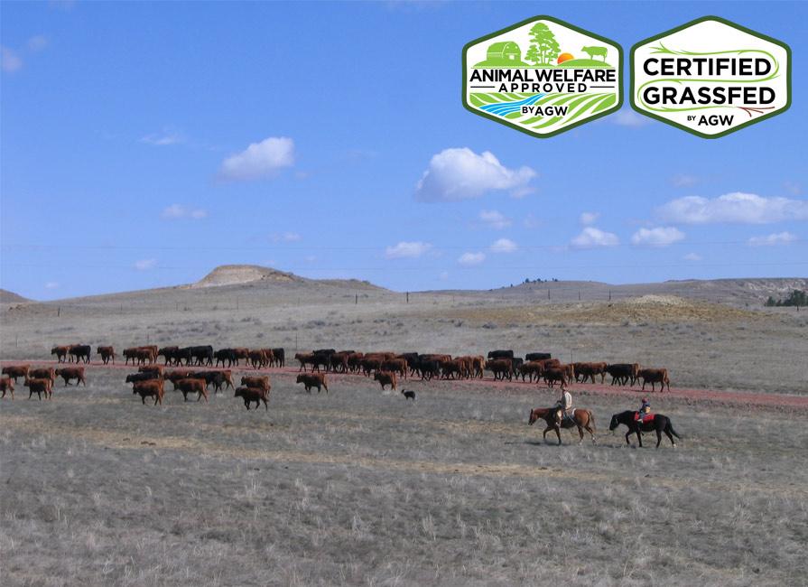 LOHOF Grass-Finished BEEF Farm Profile