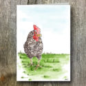 Chicken AGW Branded Greeting Card (sold In Packs Of Five)