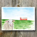 Sheep AGW Branded Greeting Card (sold In Packs Of Five)